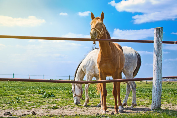 Texas Fencing Laws You Must Know Ranchers Fencing