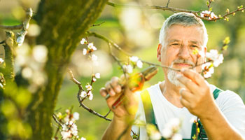 trimming tree bud