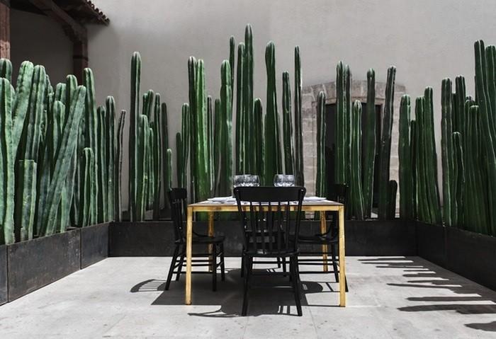 backyard cactus fence