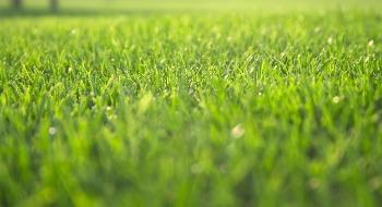 Professional Lawn Edging in Corpus Christi, TX