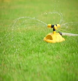 Watering Sod in the Fall in Austin TX